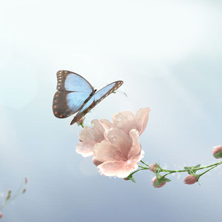 Van Cleef & Arpels celebrates Spring with an imaginative digital experience